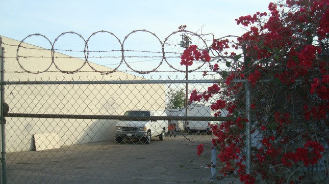 bougainvillea and barbed wire