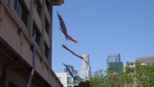 LT X15 Pl Kites