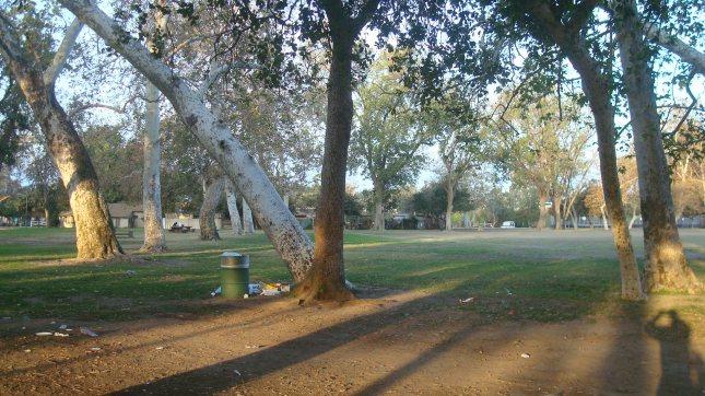 NH 05 Pk Tree Shad