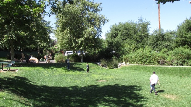 A grassy expanse in the park.