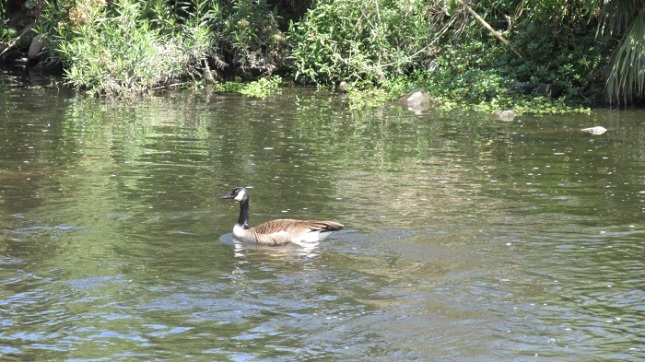 One of the river's current residents.