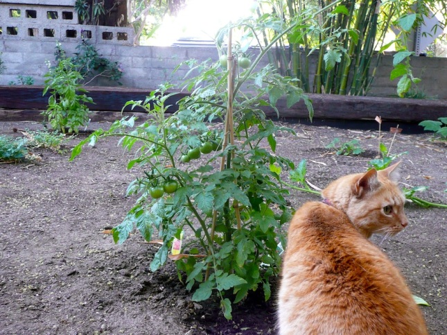 A cat checking out the garden.