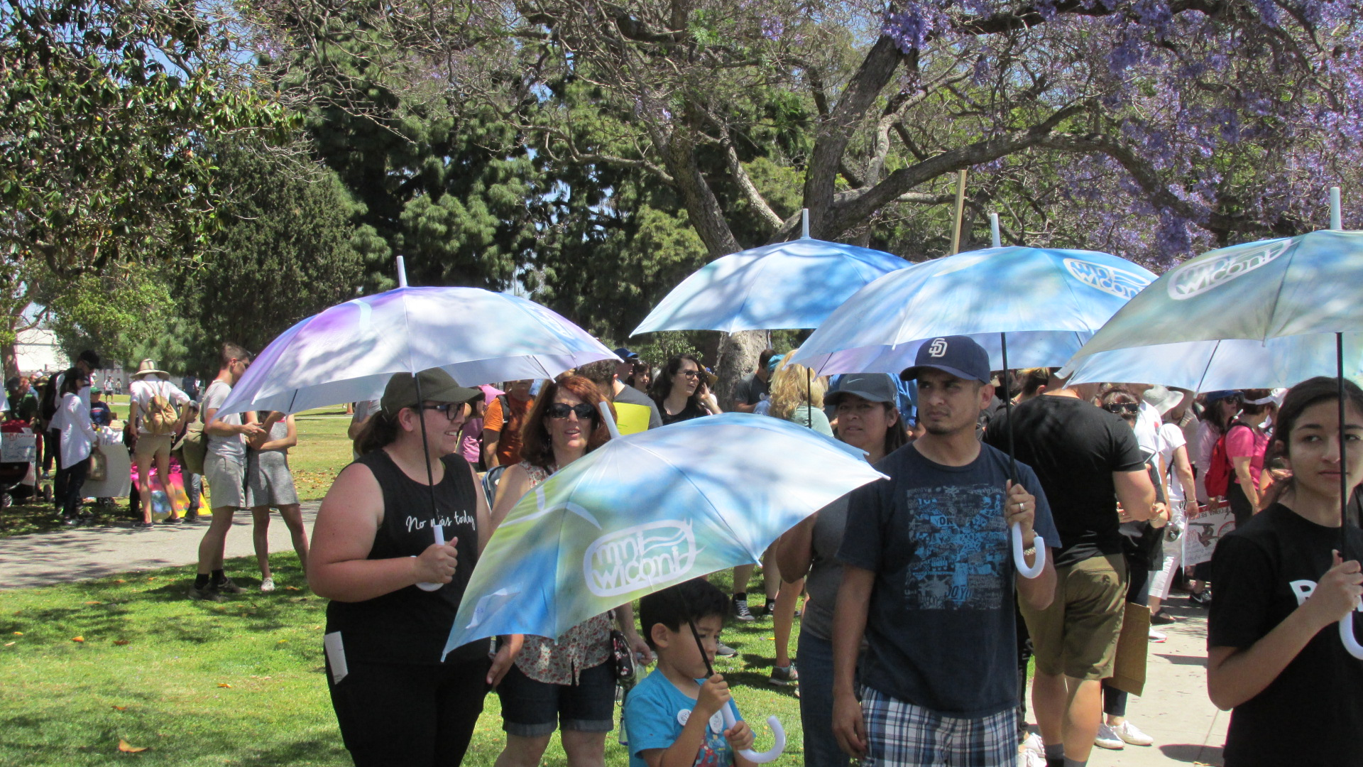 PCM 62 Umbrellas