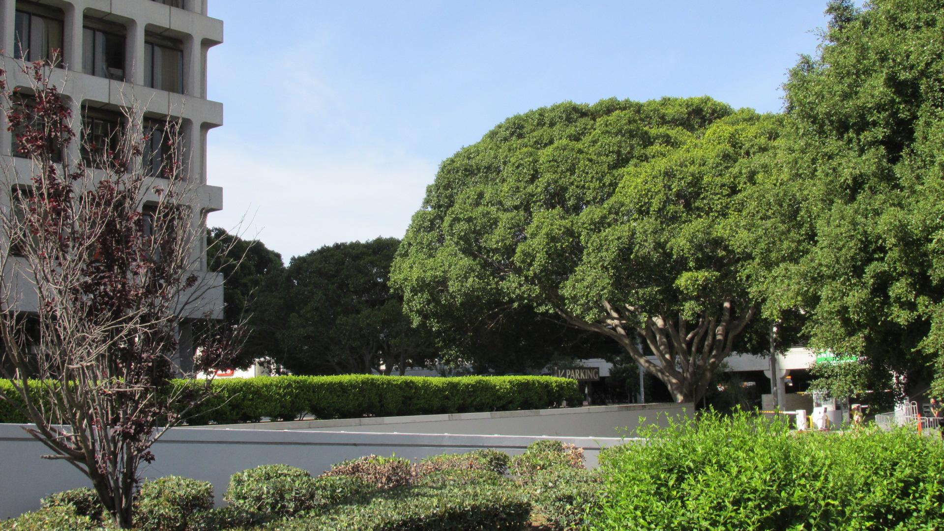 LP 12 Sm Tree