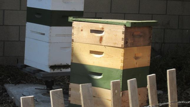 CUF 43 Bees