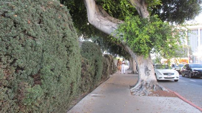 Pkg 60 Trees 1