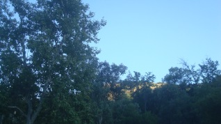 GP 1908 2 Trees 2