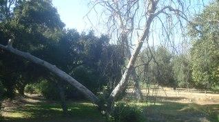 GP 1908 4 Tree 2